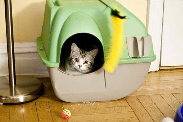 lettiera toilette gatto