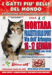 locandina felina Mortara