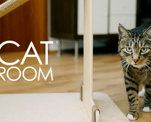 Catroom accessori gatto