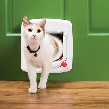Gattaiola per gatti come scegliere