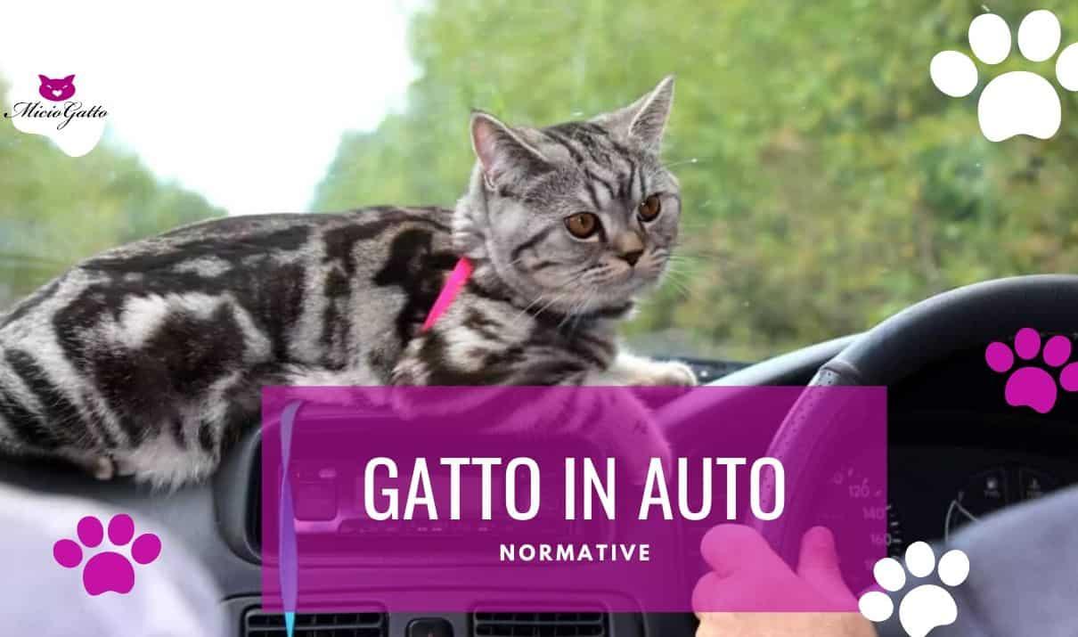 gatto in auto viaggiare con il gatto al volante