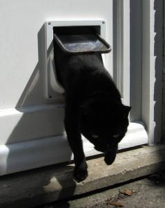 La gattaiola per il gatto