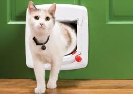 Gattaiola per gatti