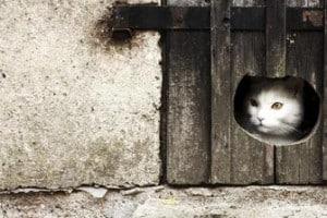 Abituare il gatto alla gattaiola