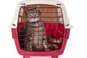 Viaggiare con il gatto in auto
