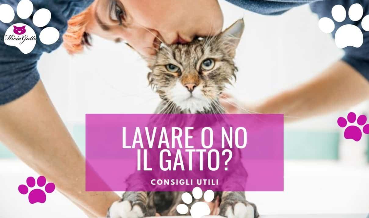 lavare il gatto consigli fare il bagno al gatto