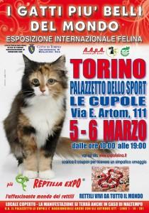 locandina felina Torino