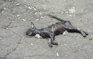 Gatto ferito per strada