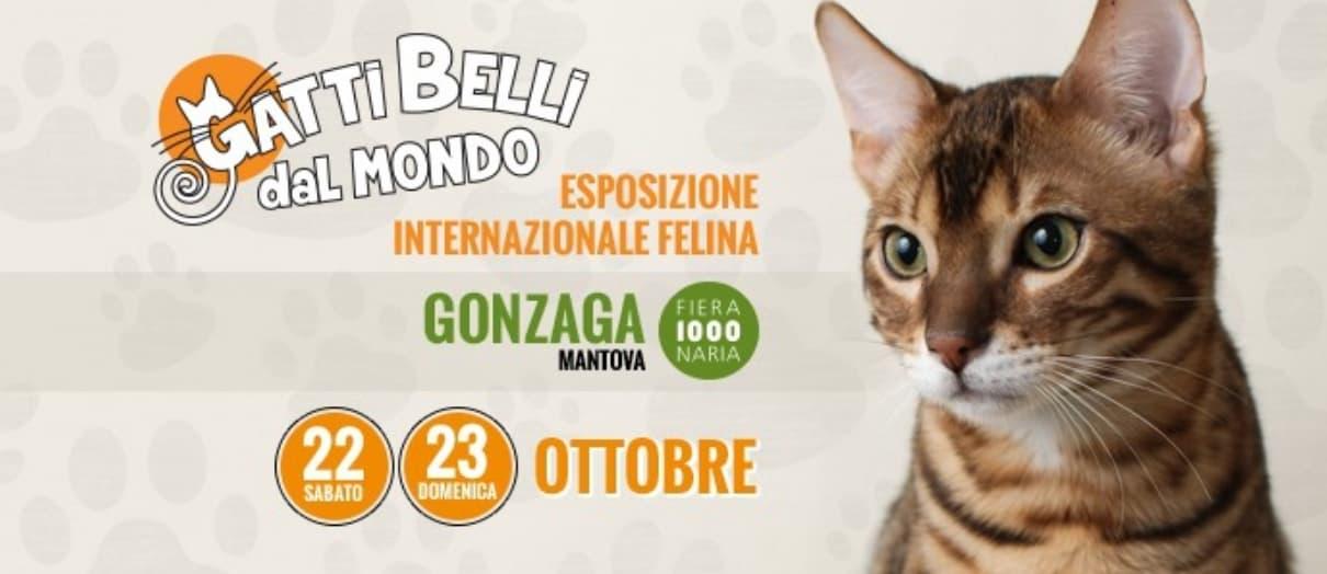 Gatti belli dal mondo Esposizione felina di Gonzaga 2016