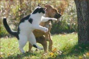 Cagnolino e gattino che giocano