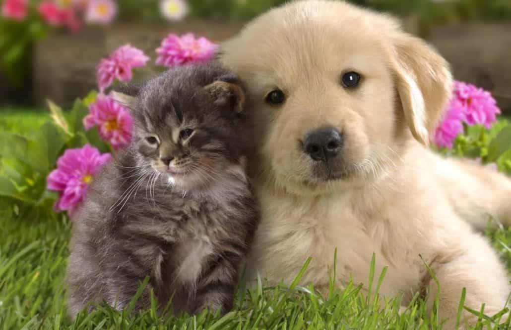 Convivenza Tra Cane E Gatto Vivere Insieme Nella Stessa Casa
