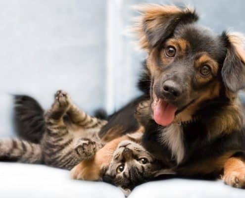 Cane e gatto: convivenza