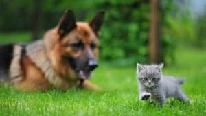 Cane e gatto insieme: è possibile?