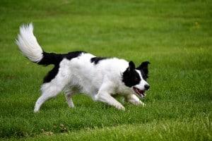 Psicologia del cane: come il cane vede il gatto