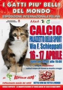 locandina felina Calcio