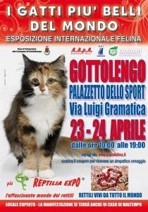 locandina_felina Gottolengo