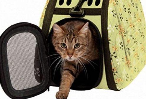 Miglior trasportino per gatti
