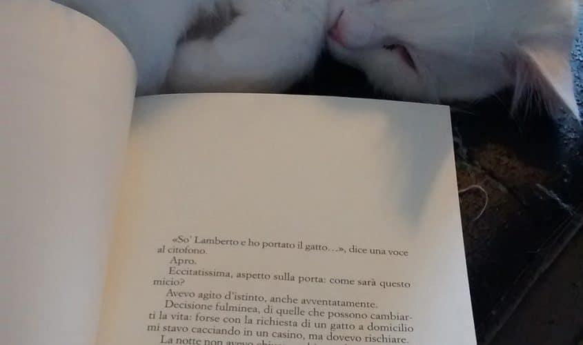Migliori libri e romanzi sui gatti