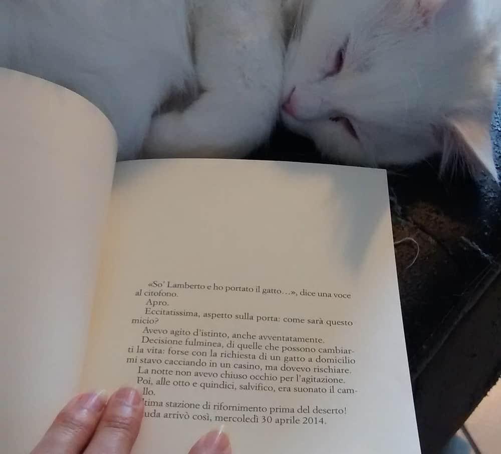 I Migliori Romanzi Sui Gatti Consigli Su Libri A Tema Gatto