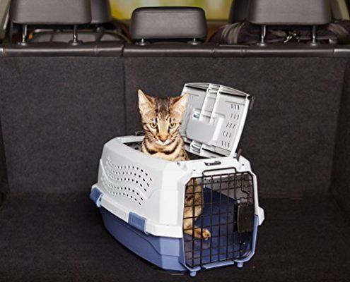 Gatto in aereo Trasportino
