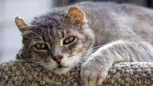 alimentazione gatto anziano magro