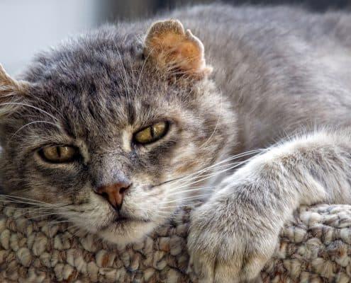 alimentazione gatto anziano