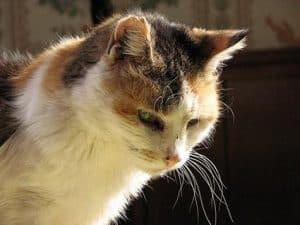 gatto anziano magro