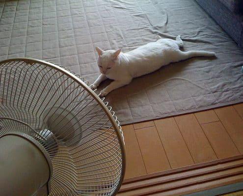 Come far stare il gatto al fresco e proteggerlo dal caldo - Come fare il bagno al gatto ...