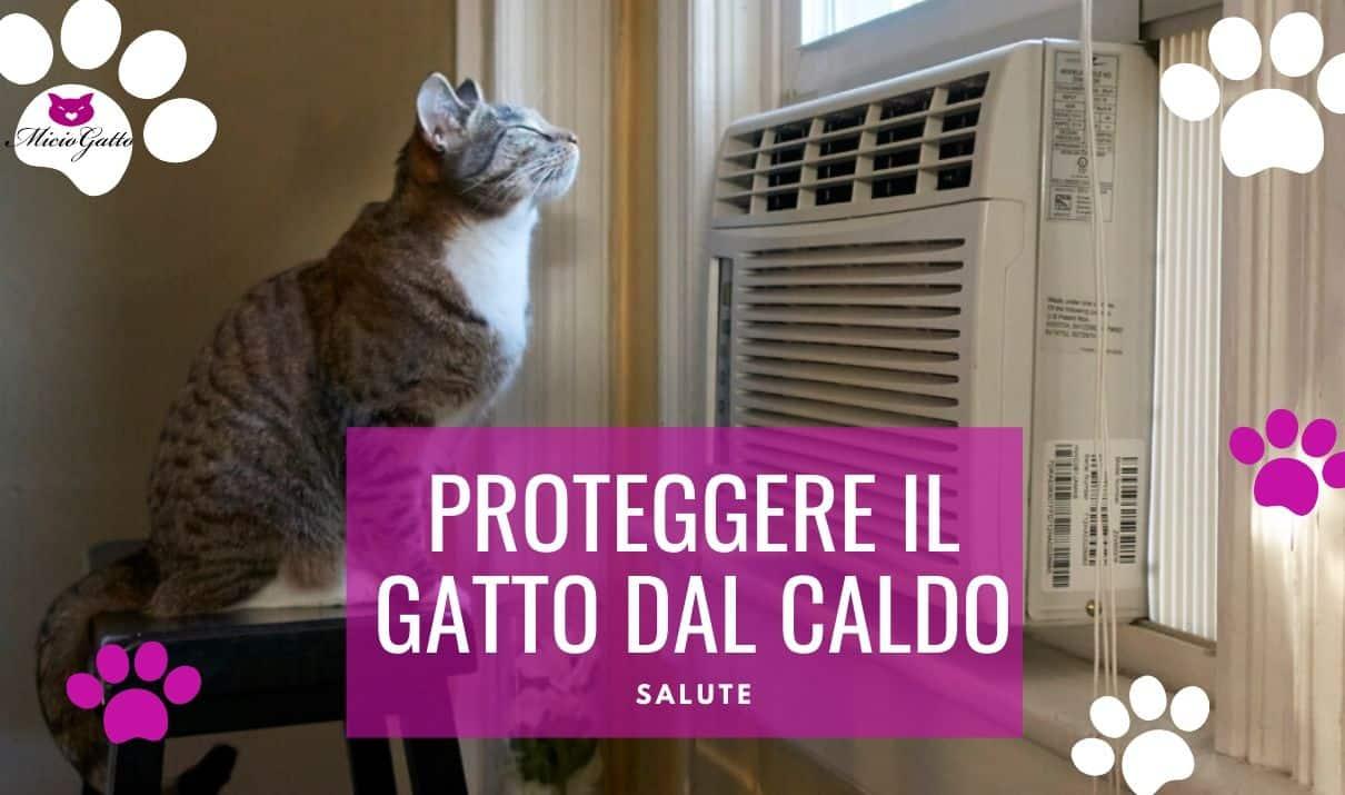Casa Troppo Calda Rimedi come far stare il gatto al fresco e proteggerlo dal caldo
