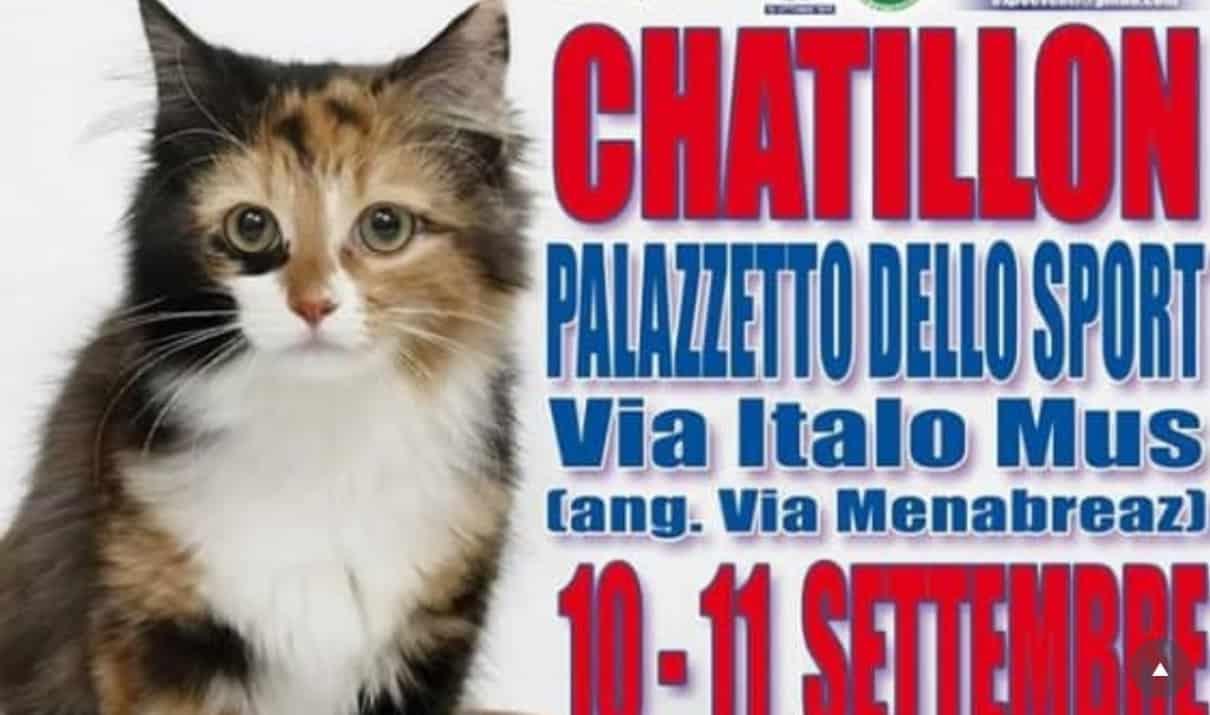 Esposizione felina di Chatillon