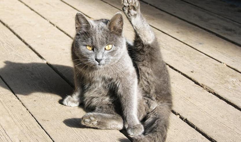 Il gatto si lecca continuamente, freneticamente ed in modo compulsivo? Ecco perché