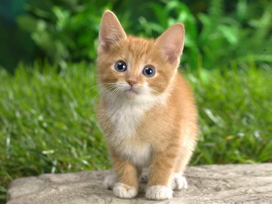Come Educare Un Gatto A Convivere Con Noi Miciogattoit