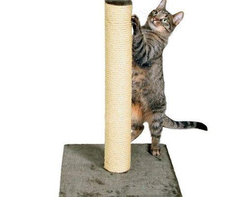 Educare un gatto a non graffiare: il tiragraffi