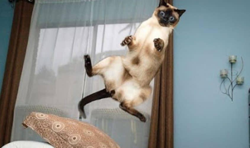 I 7 comportamenti più strani e bizzarri del tuo gatto: i gatti sono pazzi?