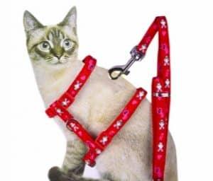 Pettorina per gatti ad H