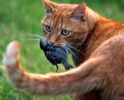 Durata vita di un gatto