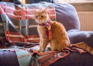 Il gatto di A spasso con Bob