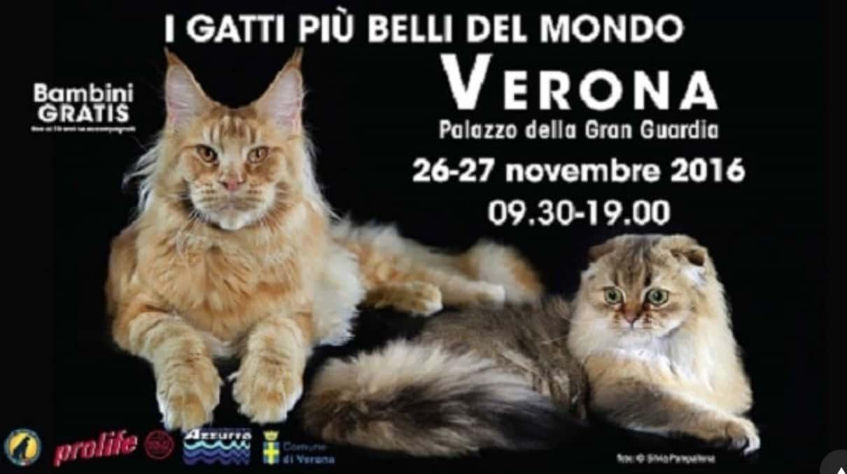 Esposizione Internazionale Felina Verona I gatti più belli del mondo 2016