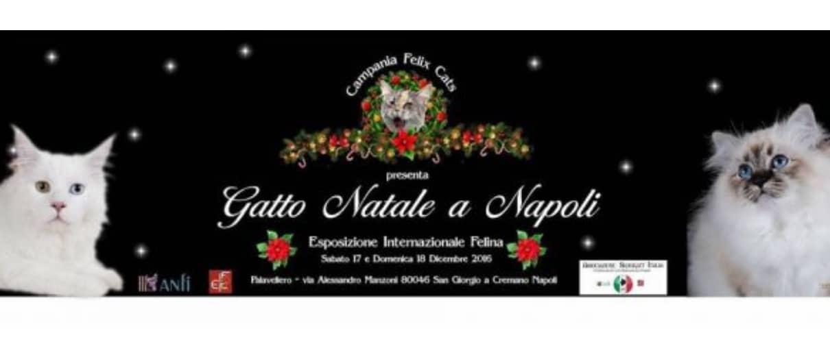 Esposizione felina Gatto Natale a Napoli 2016