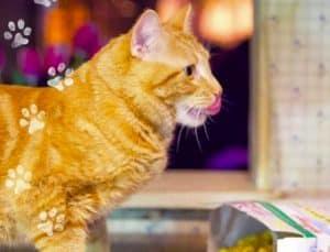 Il gatto Bob di A spasso con Bob