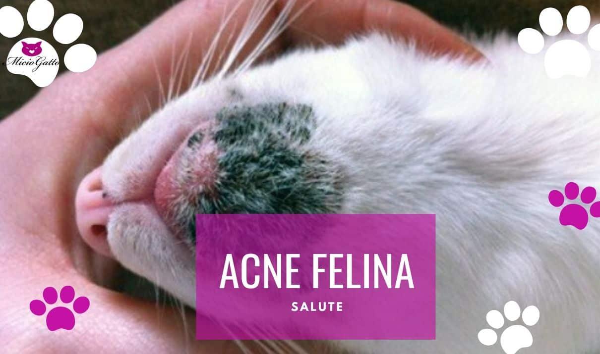 ance felina sintomi cure