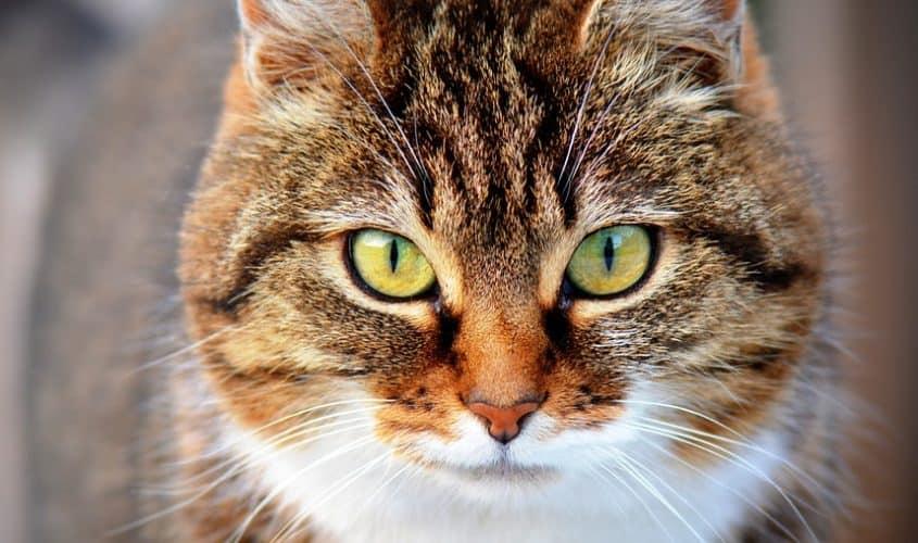 Quanto vive un gatto?