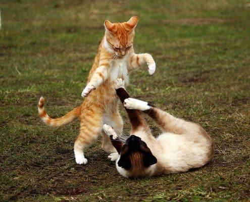 Il gatto morde per gioco?