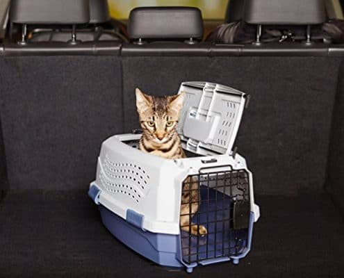 gatto in aereo come fare