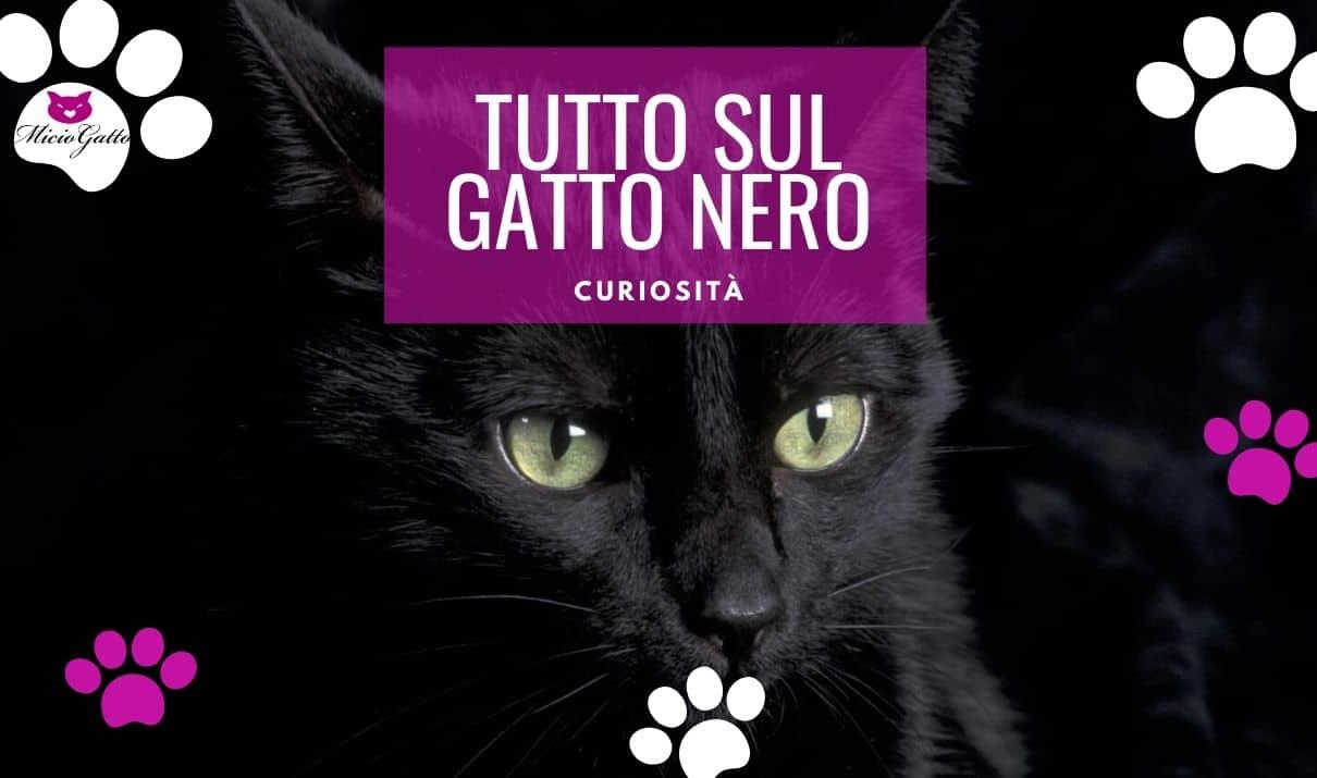 gatto nero superstizione caratteristiche