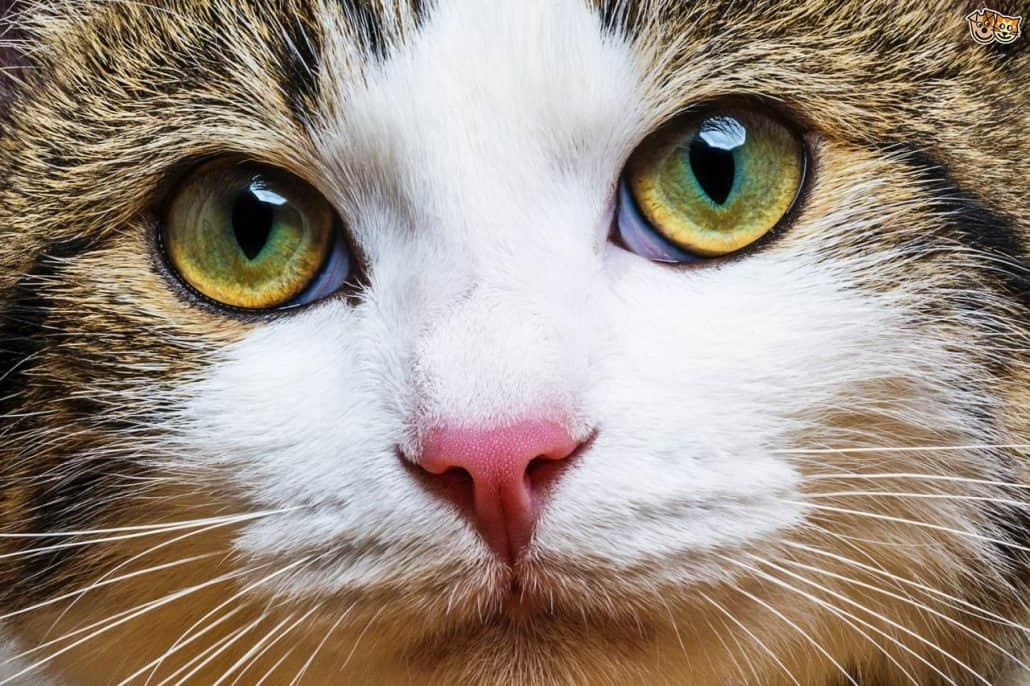 rapida perdita di peso nei gattini