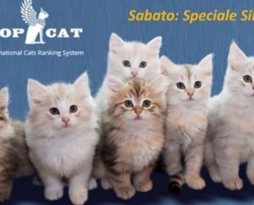 Esposizione Internazionale Felina di San Genesio ed Uniti (PV) 2017
