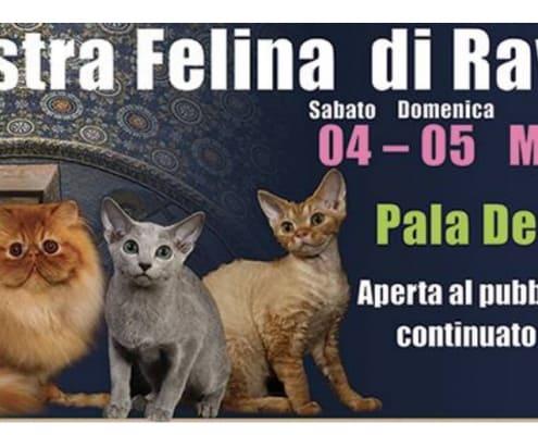 Expo Aristogatti mostra Felina di Ravenna 2017