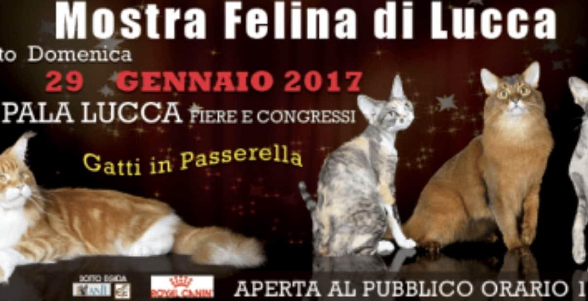 Expo Internazionale Felina Di Lucca 2017