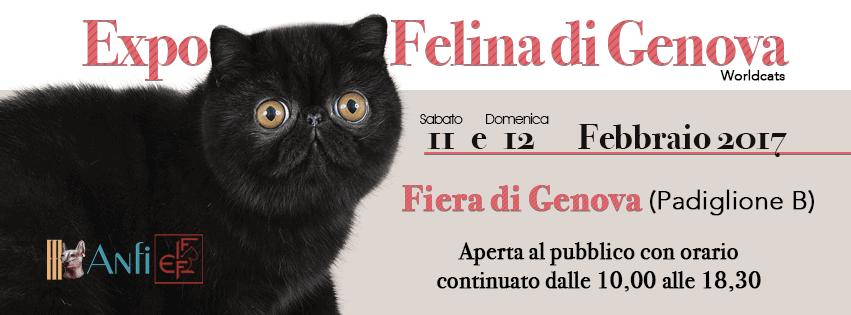 Expo felina genova 2017
